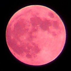 A Rose Moon