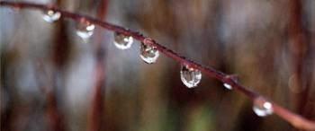 frozen raindrops