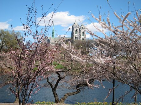 Branch Brook Park in bloom with the Cathedral in the distance