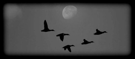 duck moon