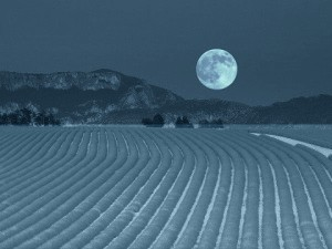 farm full moon