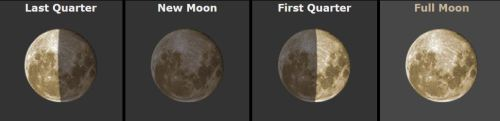 moon 4 phases