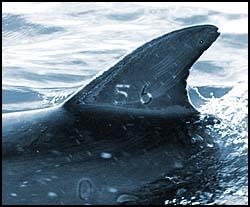 dolphin56