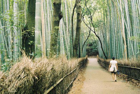 bamboo_forest_arashiyama_kyoto_oliveheartkimchi