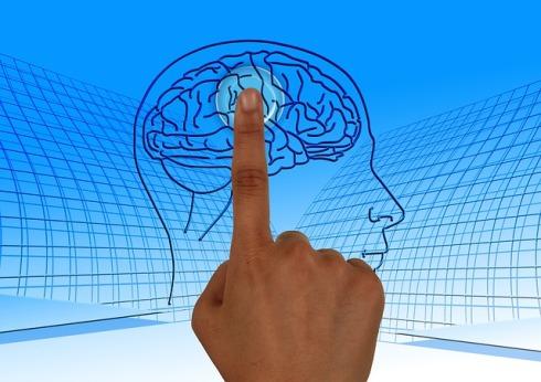 brain pixabay
