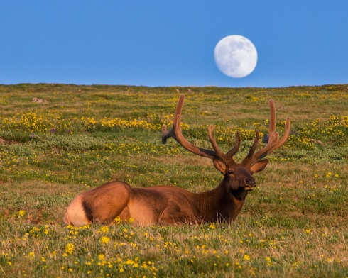 elkmoon-flickr