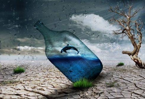 dolphin-pixabay image