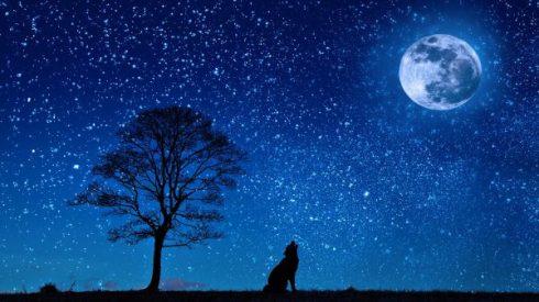 wolf-moon-pixabay