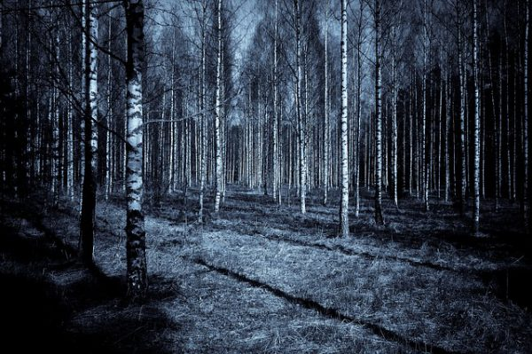remote viewing of a forest