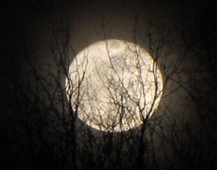 moon autumn tree