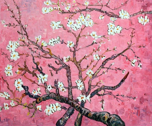Branches of an Almond Tree in Blossom (pink)