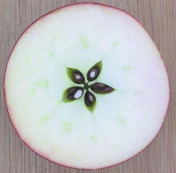 apple pentagram