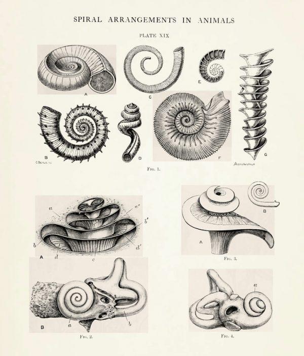 spirals ear